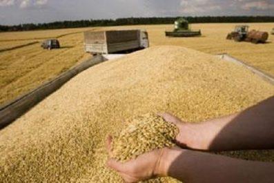 BLÉ ET ORGE : «Les semences seront algériennes»