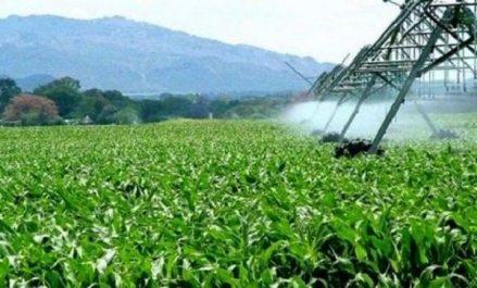 La surface agricole irriguée en Algérie atteindra 2 millions d'hectares fin 2018