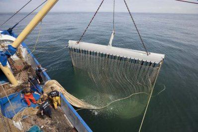 Pêche industrielle : L'UE accusée d'avoir cédé à des lobbies