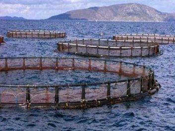 Sauvegarde des ressources halieutiques : Mettre un terme à la surexploitation et aux mauvaises pratiques