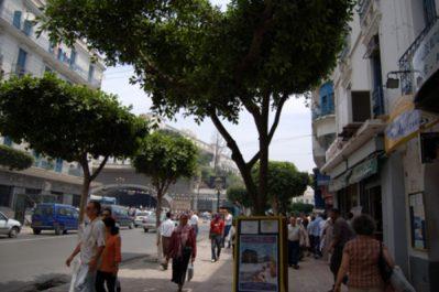 64% des Algériens favorables à la laïcité