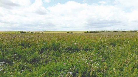 Terres agricoles inexploitées et abandonnées par les bénéficiaires 200 000 hectares récupérés