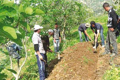 Ferme pilote de Bousfer : Un partenariat privé-public pour redonner un nouveau souffle à l'agriculture
