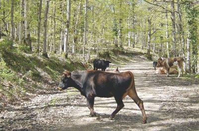 Forêt de Béni Salah à Guelma : Patrimoine à classer en réserve protégée