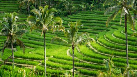 Selon l'OMT : Le tourisme mondial s'est envolé en 2017