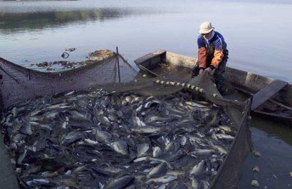 ANNABA : Les marins pêcheurs paralysent le port