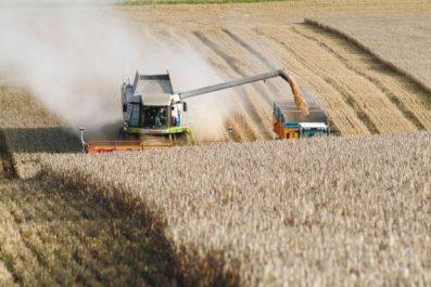 Tiaret: L'agriculture d'autoconsommation à la mode