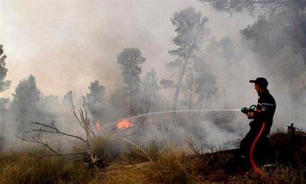 Constantine : plus de 330 hectares de forêt et de broussailles détruits en 2017