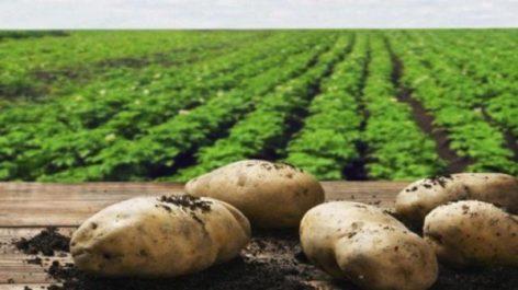 Des investisseurs hollandais intéressés par le partenariat dans le secteur agricole