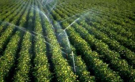 Bouazghi: nécessité de l'adaptation des agriculteurs à l'économie des eaux d'irrigation