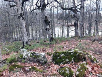 Circuit privilégié des agences de voyagges : Un paradis forestier nommé Akfadou