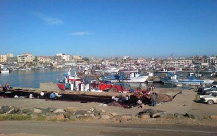 Le port de Zemmouri El Bahri se lance dans l'exportation