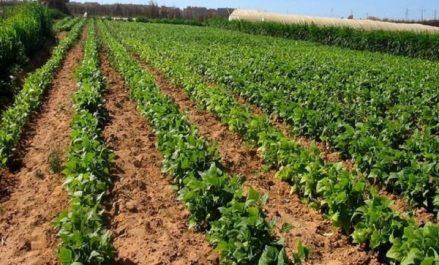 Agriculture: lutte biologique contre les insectes nuisibles, une expérience réussie à Oran