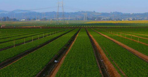 Un nouveau remède «bio» pour les cultures agricoles