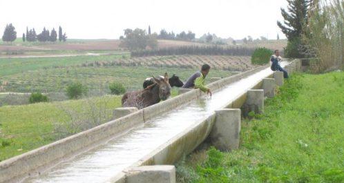 Économie des eaux d'irrigation à Béchar : Nécessité de l'adaptation des agriculteurs