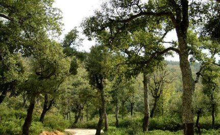 L'appel est de la DG des forets : 72 000 hectares et 43 forêts récréatives attendent des investisseurs