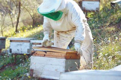 Mohamed Bouteldja (Président de l'Association des Apiculteurs de la Wilaya d'Alger): «La politique de proximité et des foires a réhabilité le miel algérien»