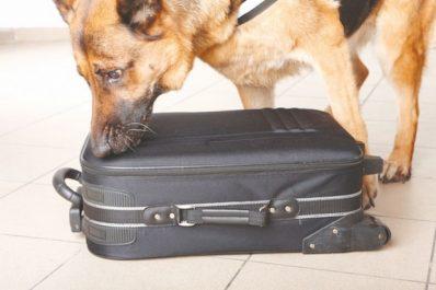 Tamanrasset : Des chiens renifleurs contre le trafic de drogue