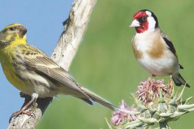 BRACONNAGE À ANNABA : Des espèces d'oiseaux menacées d'extinction