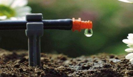 Elargir l'irrigation au goutte-à-goutte pour développer la filière de la tomate industrielle
