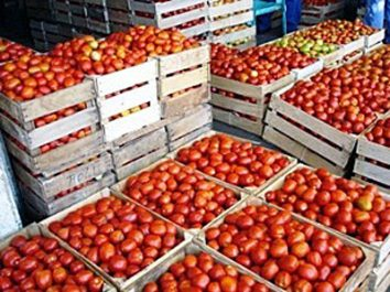 Chlef – Tomate industrielle : comment redonner confiance aux producteurs ?