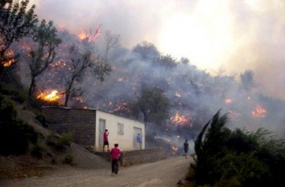 Tizi-Ouzou: Un taux de 60% de réalisation du programme de prise en charge des dégâts des incendies