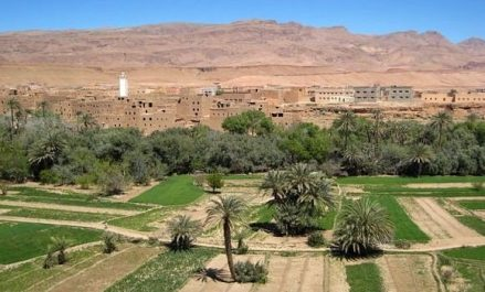 Agriculture: résultats «remarquables» enregistrés ces dernières années à Ghardaïa