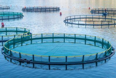 PÊCHE : La révolution par l'aquaculture