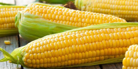 Le prix du maïs en hausse sur Euronext