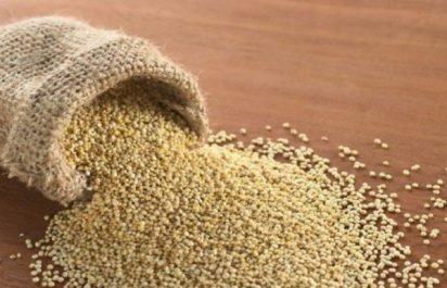 Le quinoa peut s'avérer comme un complémentaire de la culture du blé en Algérie