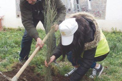 """SON LANCEMENT EST PRÉVU À AÏN EL-HAMMAM : Opération """"Un arbre, une maison"""""""
