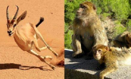 Faire des TIC un moyen de lutte contre le braconnage et le commerce illicite d'animaux sauvages