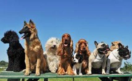 Vidéo/ Sidi Bel Abess: Des chiens vendus à 60 millions!
