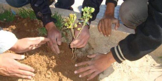 CELEBRATION DE LA JOURNEE DE L'ARBRE PAR LA POLICE : Le Parc d'El-Arsa a reçu 120 plants forestiers