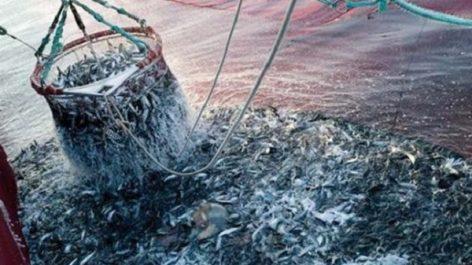 Accord pêche UE-Maroc: le gouvernement espagnol appelé à se conformer à la décision de la CJUE