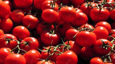 La conserverie de Reggane entame la production du triple concentré de tomate