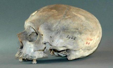 Parmi les crânes recensés au musée de Paris, il y a 70 crânes de résistants de Zaâtcha