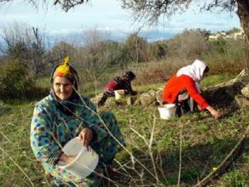 Agriculture de montagne : Un plan d'urgence pour Tizi Ouzou