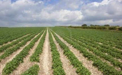 Foncier: Trois millions d'hectares de terres agricoles non exploitées