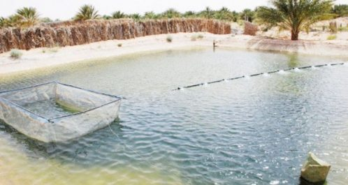 Aquaculture : Adoption des études de deux nouveaux projets à Chlef