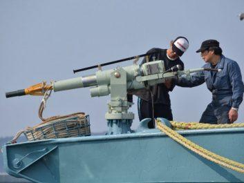 Le Japon tue 333 baleines pour «des raisons scientifiques»