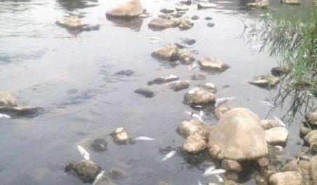Pollution à Akbou (BÉJAIA) : Péril sur l'oued Soummam