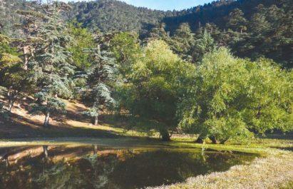 Sidi Bel Abbès : Concession de 75 hectares de forêt à des fins récréatives