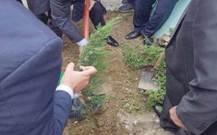 En hommage aux 257 victimes du crash de l'avion militaire de Boufarik : Plantation de 257 arbres au carré des martyrs de Tizi Ouzou