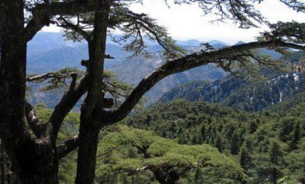 Bouazghi: appel à la préservation et le développement des parcs nationaux
