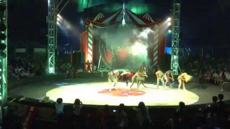 Opéra d'Alger: L'Afro Cirkus arrive !