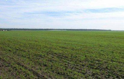souk ahras: Une superficie globale de 3 000 hectares pour la culture des légumes secs