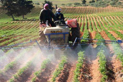 Mostaganem: Un agriculteur confirme l'utilisation de pesticides dangereux