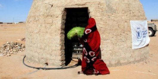 Cultiver des aliments dans le Sahara algérien grâce au fourrage vert hydroponique