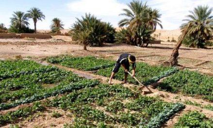 Agriculture: la stratégie nationale repose sur le soutien et l'accompagnement des producteurs